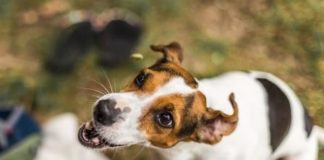 Biotech-Start-up sammelt 11 Mio. USD für fleischloses Hundefutter ein