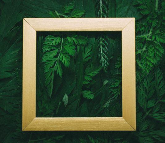 Gut fürs Geschäft: Drei Gründe für nachhaltige Investments